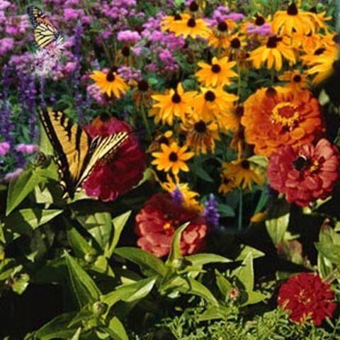 Butterfly in my garden.