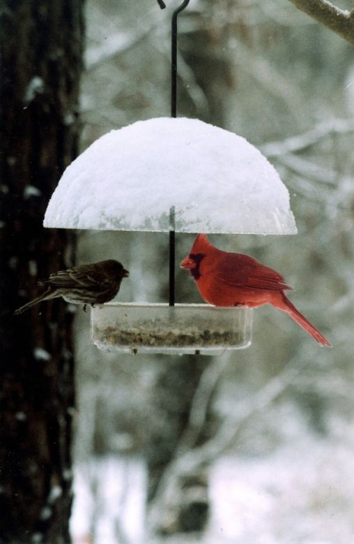Cardinal Looking to Take out its Competition!