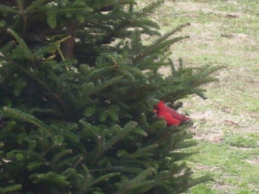 After Christmas I put my tree outside for the birds to enjoy!
